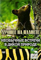 Animal Planet: Необычные встречи в дикой природе