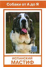 Выведен в провинции Эстремадура на юго-западе Испании. Использовался для охраны овечьих отар, собачьих боев, как охотничья на крупного зверя. По размерам соперничает с английским мастиффом. Характеристика породы: Выносливая, спокойная, добрая, большая собака. Содержание: Требует пространства и хороших прогулок Использование: Собака - сторож, собака-телохранитель. На этом диске Вы ознакомитесь с полезной информации об истории породы, содержанию и уходу за ней; узнаете выставочный стандарт этой собаки. И если у вас пока нет четвероногого друга, то Вы сможете разобраться в вопросе правильности Вашего выбора данной породы и Вашей готовности приобрести и содержать ее.