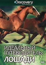 «Идеальный путеводитель» расскажет вам много нового о чудесных животных, которые живут бок о бок с человеком уже не одно тысячелетие. Вы узнаете, как лошадям удается развивать такую скорость, и как именно их тела сохраняют кислород во время бега, повышая эффективность работы легких. Вы также увидите предков современных лошадей – маленьких, размером с кошку, копытных млекопитающих.