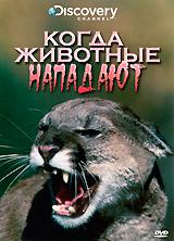 Discovery: Когда животные нападаютЭта программа - сборник удивительных и захватывающих рассказов о встречах человека с диким зверем. Что именно делает потенциальная жертва, чтобы избежать смерти? Как не допустить нападения животного? Вы узнаете это, посмотрев программу Когда животные нападают.