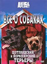 Все о собаках: Шотландский и йоркширский терьеры 2010 DVD