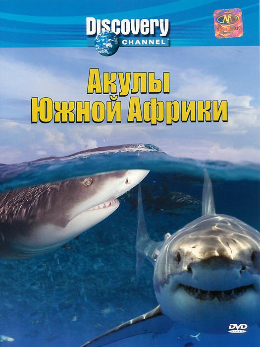В тот момент, когда люди думают, что им уже все известно про большую белую акулу, она в очередной раз поражает нас своим поведением. Воздушные нападения белых акул в Южной Африке - самые жестокие нападения хищников в природе, а Южная Африка - единственное место в мире, где происходят подобные воздушные атаки. В последнее время они случаются все чаще и чаще, т.к. популяция акул возросла после того, как прекратился их отстрел 50 лет назад.