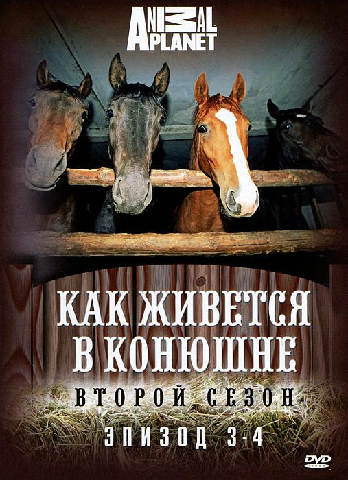 Второй сезон «Как живется в конюшне» продолжает знакомить нас с удивительным миром лошадей и конного спорта. На конюшне произошли изменения. После 7 лет совместного проживания владельцы конюшни, супруги и деловые партнеры Эд и Надя решили расстаться. Но жизнь в конюшне идет своим чередом. Эд и Надя ухаживают за лошадьми, продолжаются тренировки и уроки верховой езды.