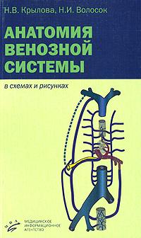 Анатомия венозной системы в схемах и рисунках