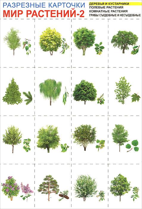 Мир растений-2. Разрезные карточки