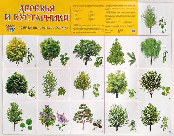 Деревья и кустарники. Познавательно-речевое развитие. Плакат