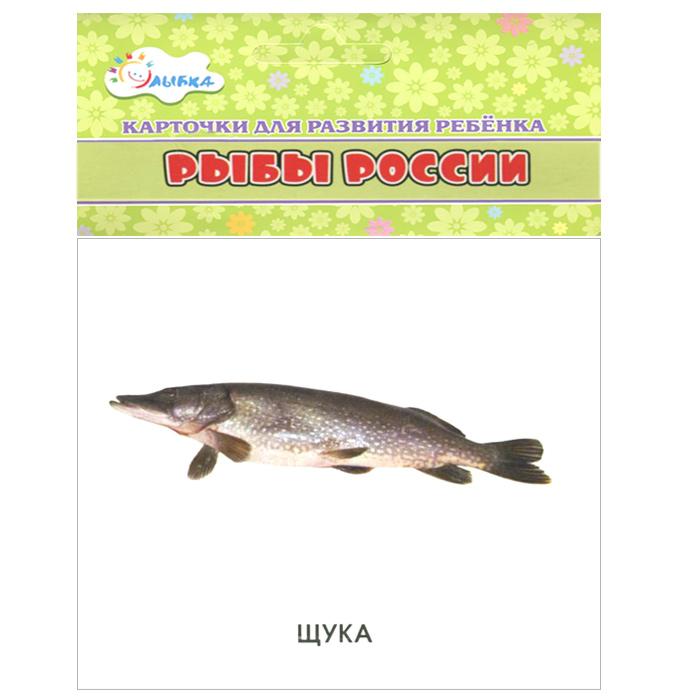Рыбы России (набор из 12 карточек)