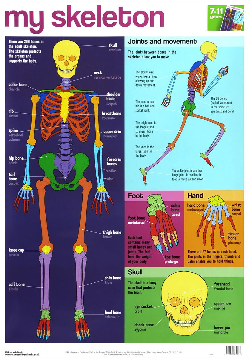 My Skeleton. Плакат