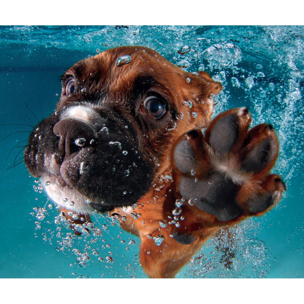 Seth Casteel. Underwater Puppies