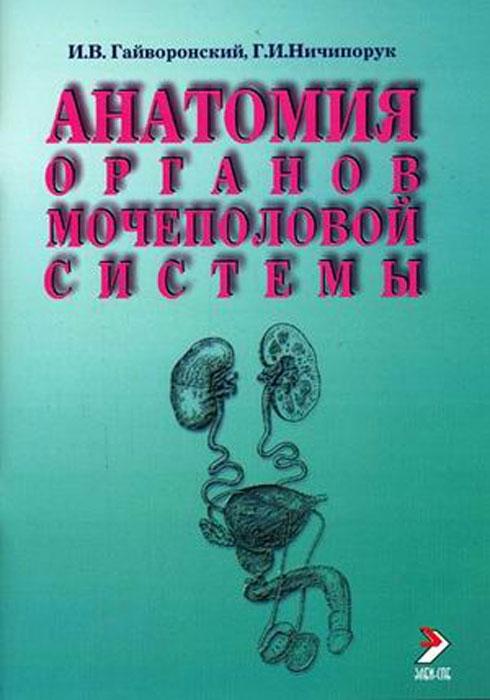 Анатомия органов мочеполовой системы