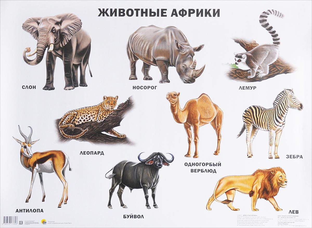 Животные Африки. Плакат