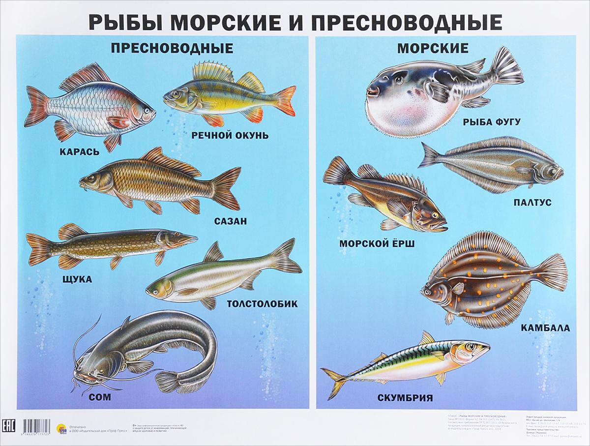 Рыбы морские и пресноводные. Плакат