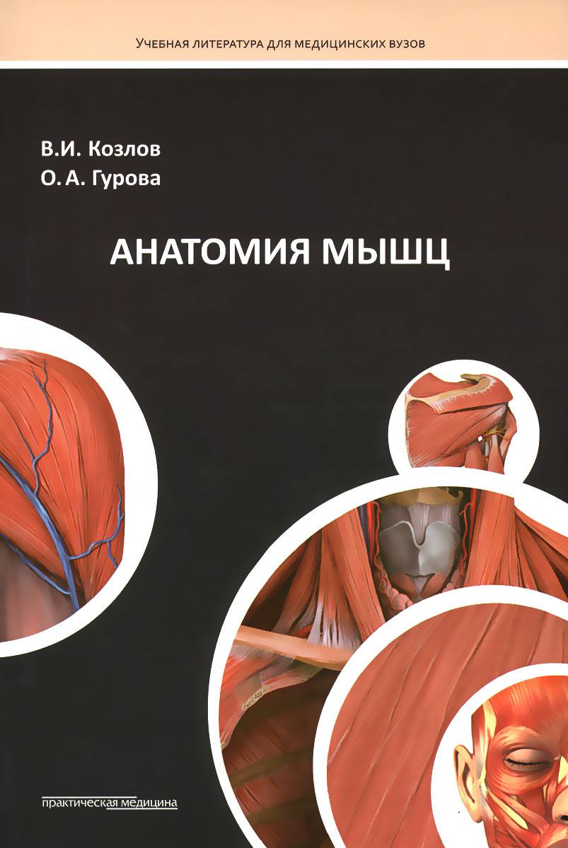 Анатомия мышц. Учебное пособие