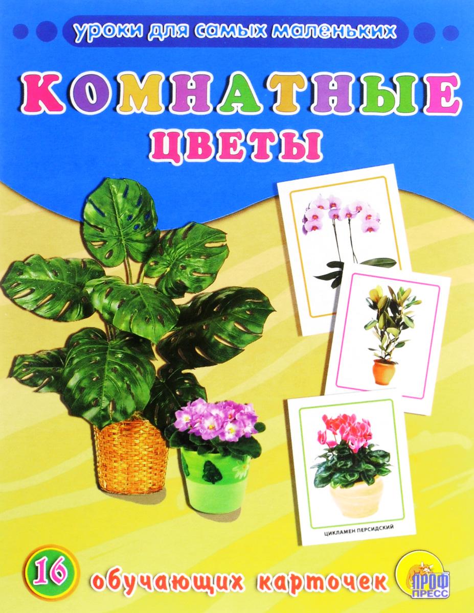 Комнатные цветы (набор из 16 обучающих карточек)