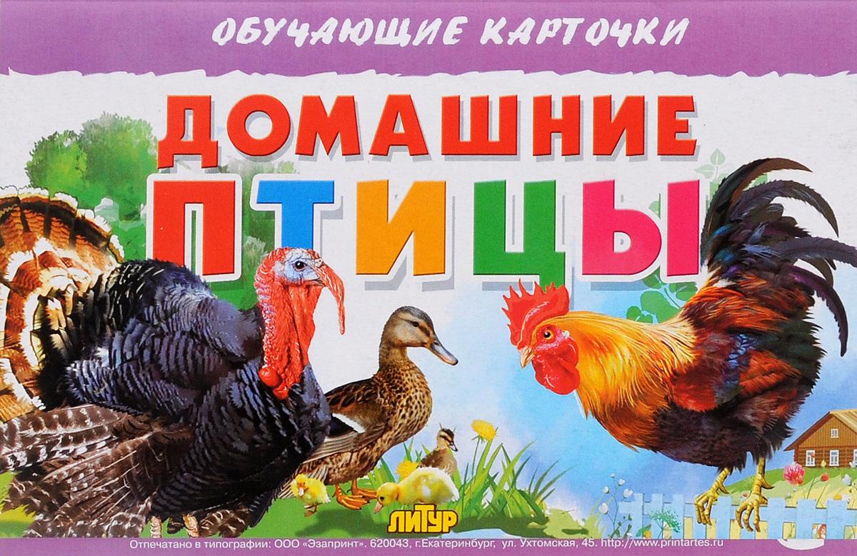 Домашние птицы (набор из 16 карточек)