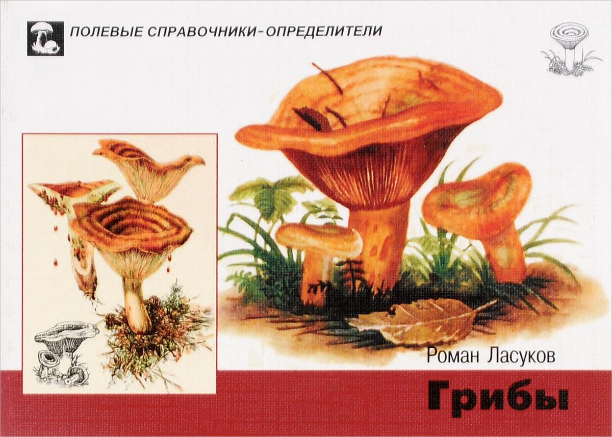 Роман Ласуков. Грибы. Карманный определитель