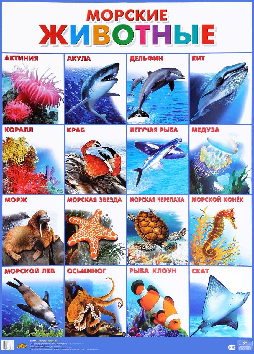 Морские животные. Плакат