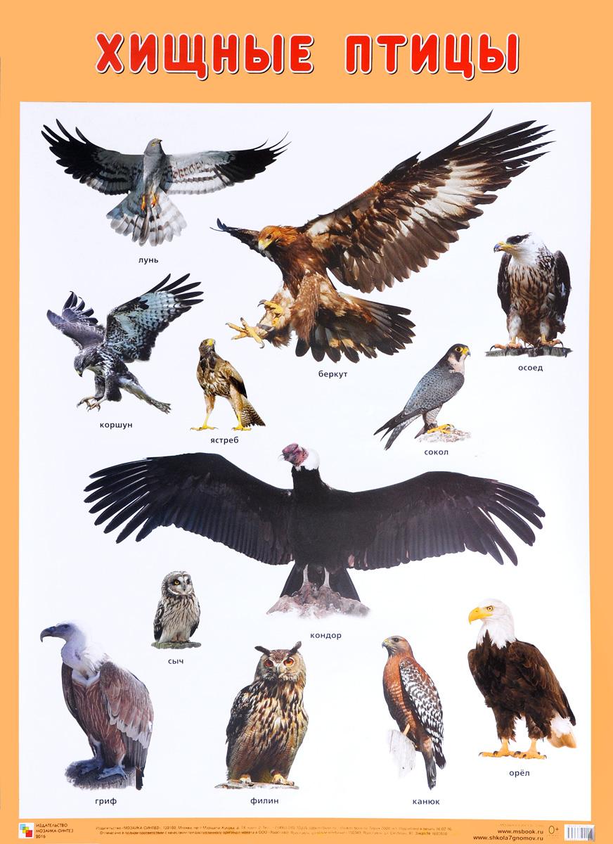 Хищные птицы. Плакат