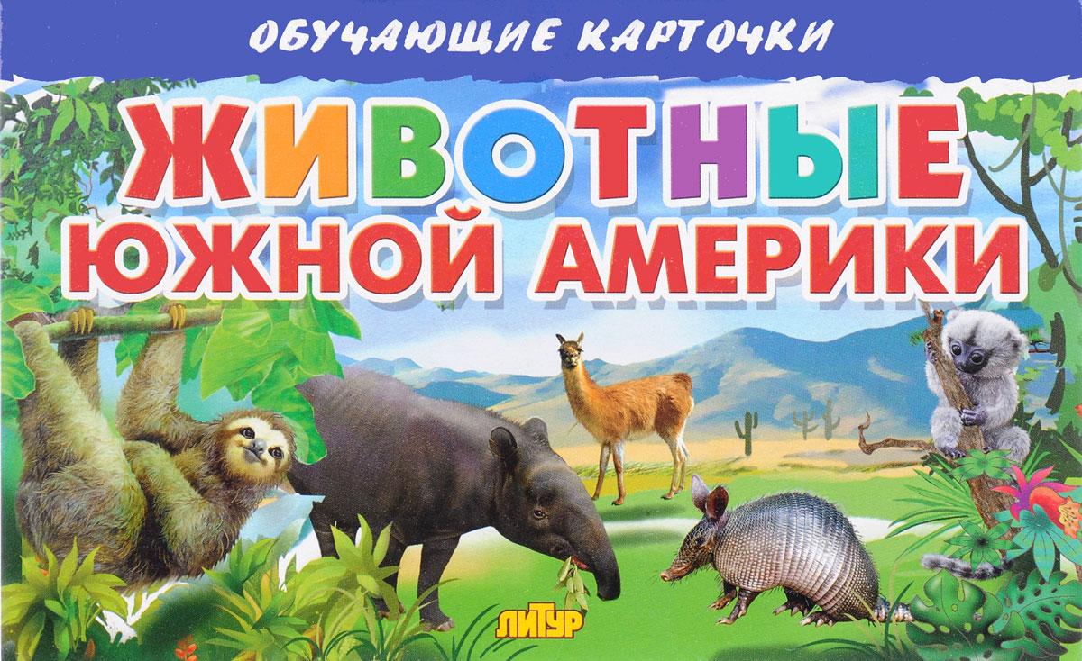 Животные Южной Америки (набор из 16 карточек)