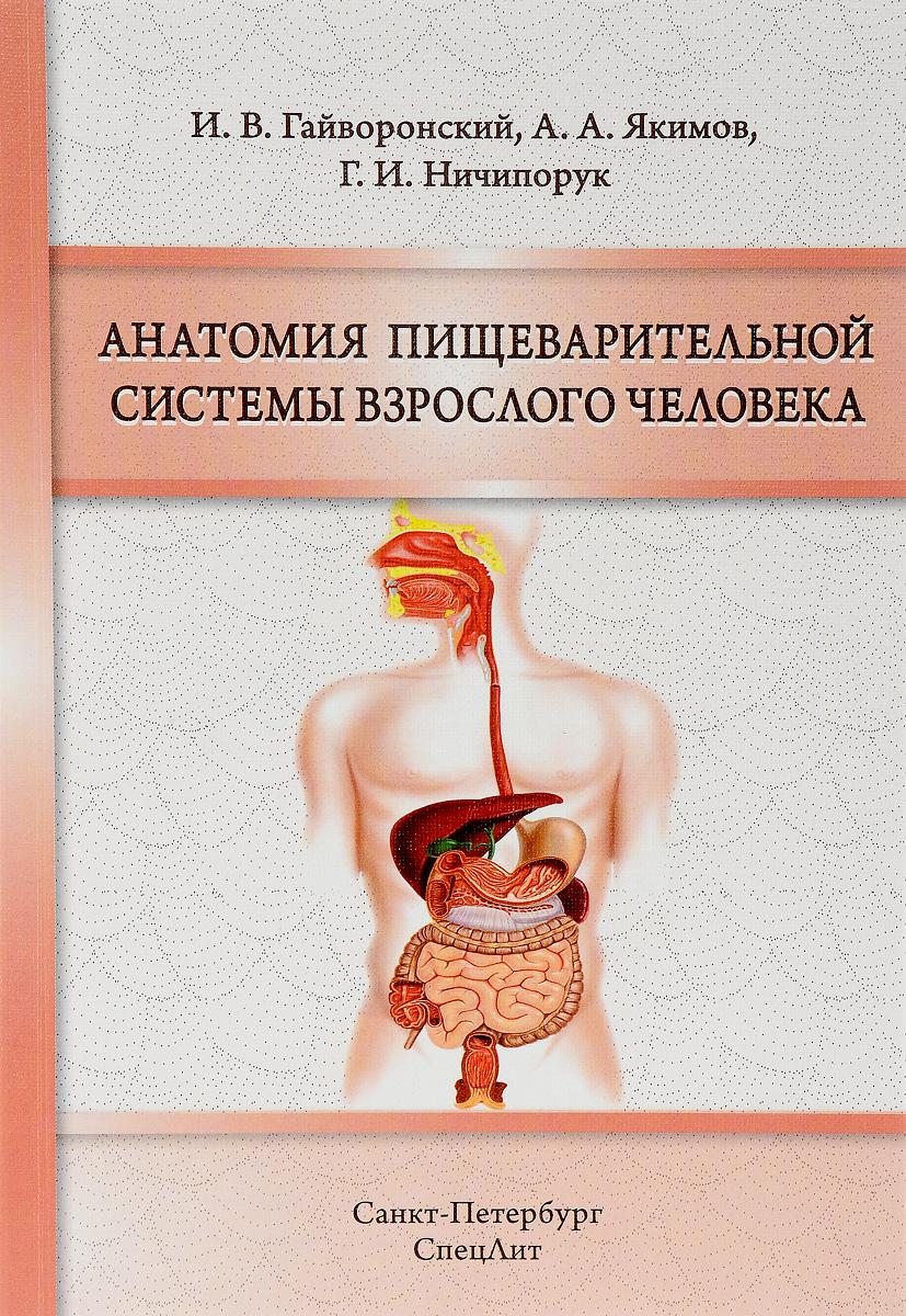 Анатомия пищеварительной системы взрослого человека. Учебное пособие