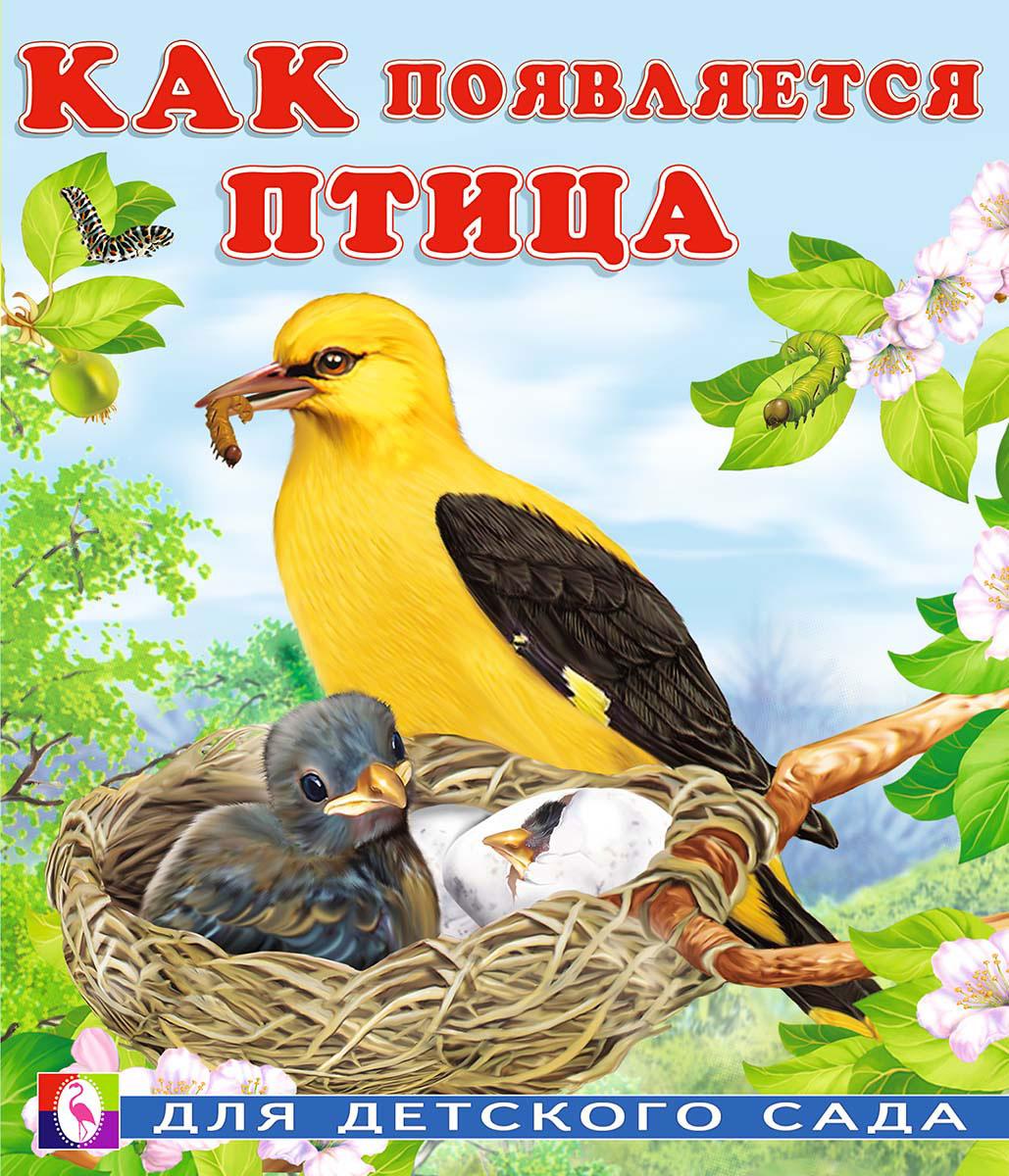 Как появляется птица