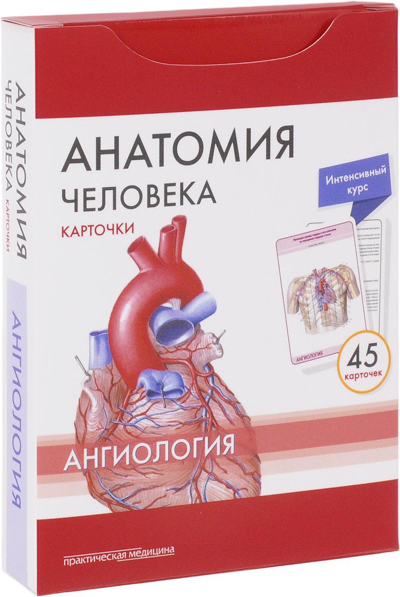 Анатомия человека. Ангиология (набор из 45 карточек)