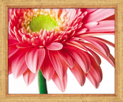 """Постермаркет / Postermarket Постер в раме """"Цветок"""", 40 x 50 см SG 14"""