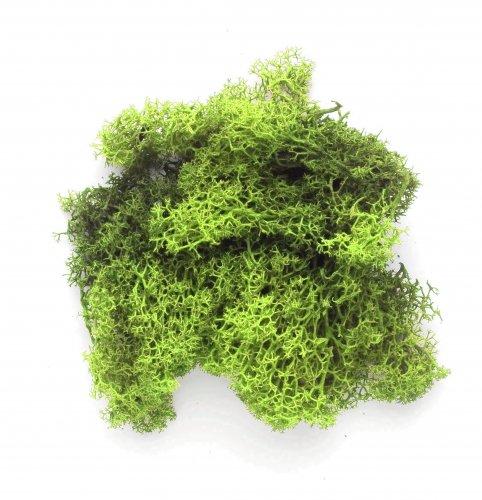 Мох Hobby Time, цвет: светло-зеленый, 50 гRSP-202SМох Hobby Time является оригинальным натуральным материалом для декора и флористики. При помощи натурального мха можно декорировать цветочные композиции или оформлять стволы и основания созданных вами искусственных деревьев. Мох можно приклеивать на основание при помощи клея ПВА или используя горячий клеевой пистолет. Мох часто используется во флористике для декорирования основания топиариев, что придает изделиям естественный вид. Для этих целей используется засушенный мох, который приклеивается на основание при помощи клея.Некоторые виды натурального мха в живом виде применяются в ландшафтном дизайне для оформления дорожек, альпийских горок или декоративных прудов и водоемов. Также мох применяется в домашнем цветоводстве и фито дизайне. Материал: натуральный мох.Вес: 50 г.