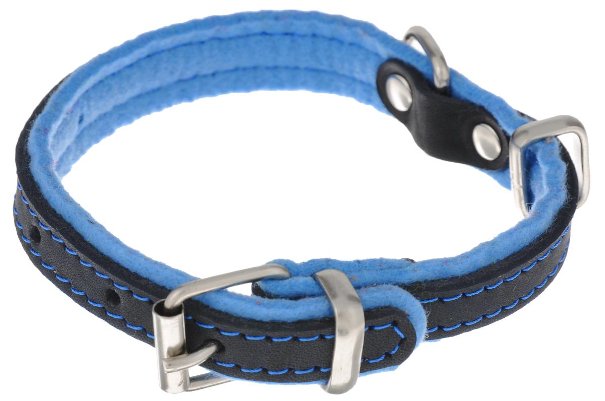 Ошейник для собак Аркон Фетр, цвет: черный, голубой, ширина 2 см, длина 43 см. оф20оф20гОшейник Аркон Фетр изготовлен из высококачественной натуральной кожи, устойчивой к влажности и перепадам температур, и фетра. Мягкий фетр предотвратит натирание шеи собаки ошейником и позволит ей с комфортом наслаждаться прогулкой. Клеевой слой, сверхпрочные нити, крепкие металлические элементы делают ошейник надежным и долговечным. Изделие отличается высоким качеством, удобством и универсальностью. Размер ошейника регулируется при помощи пряжки, зафиксированной на одном из 6 отверстий. Минимальный обхват шеи: 25 см. Максимальный обхват шеи: 36 см. Ширина: 2 см.