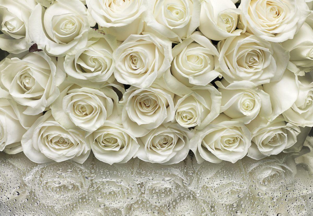 Фотообои Komar Белые розы, 3,68 х 2,54 м8-314Бумажные фотообои известного бренда Komar позволят создать неповторимый облик помещения, в котором они размещены. Фотообои наносятся на стены тем же способом, что и обычные обои. Благодаря превосходной печати и высококачественной основе такие обои будут радовать вас долгое время. Фотообои снова вошли в нашу жизнь, став модным направлением декорирования интерьера. Выбрав правильную фактуру и сюжет изображения можно добиться невероятного эффекта живого присутствия. Ширина рулона: 3,68 м. Высота полотна: 2,54 м. Клей в комплекте.