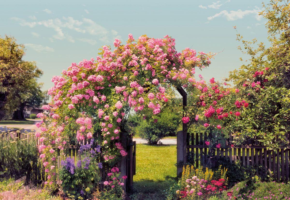 Фотообои Komar Розовый сад, 3,68 х 2,54 мU210DFБумажные фотообои известного бренда Komar позволят создать неповторимый облик помещения, в котором они размещены. Фотообои наносятся на стены тем же способом, что и обычные обои. Благодаря превосходной печати и высококачественной основе такие обои будут радовать вас долгое время. Фотообои снова вошли в нашу жизнь, став модным направлением декорирования интерьера. Выбрав правильную фактуру и сюжет изображения можно добиться невероятного эффекта живого присутствия.Ширина рулона: 3,68 м.Высота полотна: 2,54 м. Клей в комплекте.