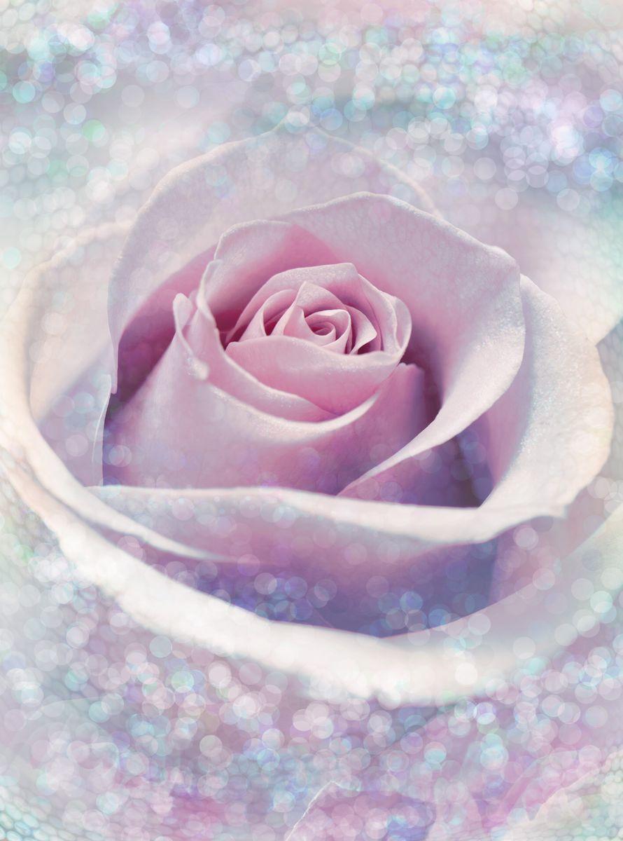Фотообои Komar Нежная роза, 1,84 х 2,48 мXXL2-020Флизелиновые фотообои известного бренда Komar позволят создать неповторимый облик помещения, в котором они размещены. Фотообои наносятся на стены тем же способом, что и обычные обои. Благодаря превосходной печати и высококачественной флизелиновой основе такие обои будут радовать вас долгое время. Фотообои снова вошли в нашу жизнь, став модным направлением декорирования интерьера. Выбрав правильную фактуру и сюжет изображения можно добиться невероятного эффекта живого присутствия. Ширина рулона: 1,84 м. Высота полотна: 2,48 м.