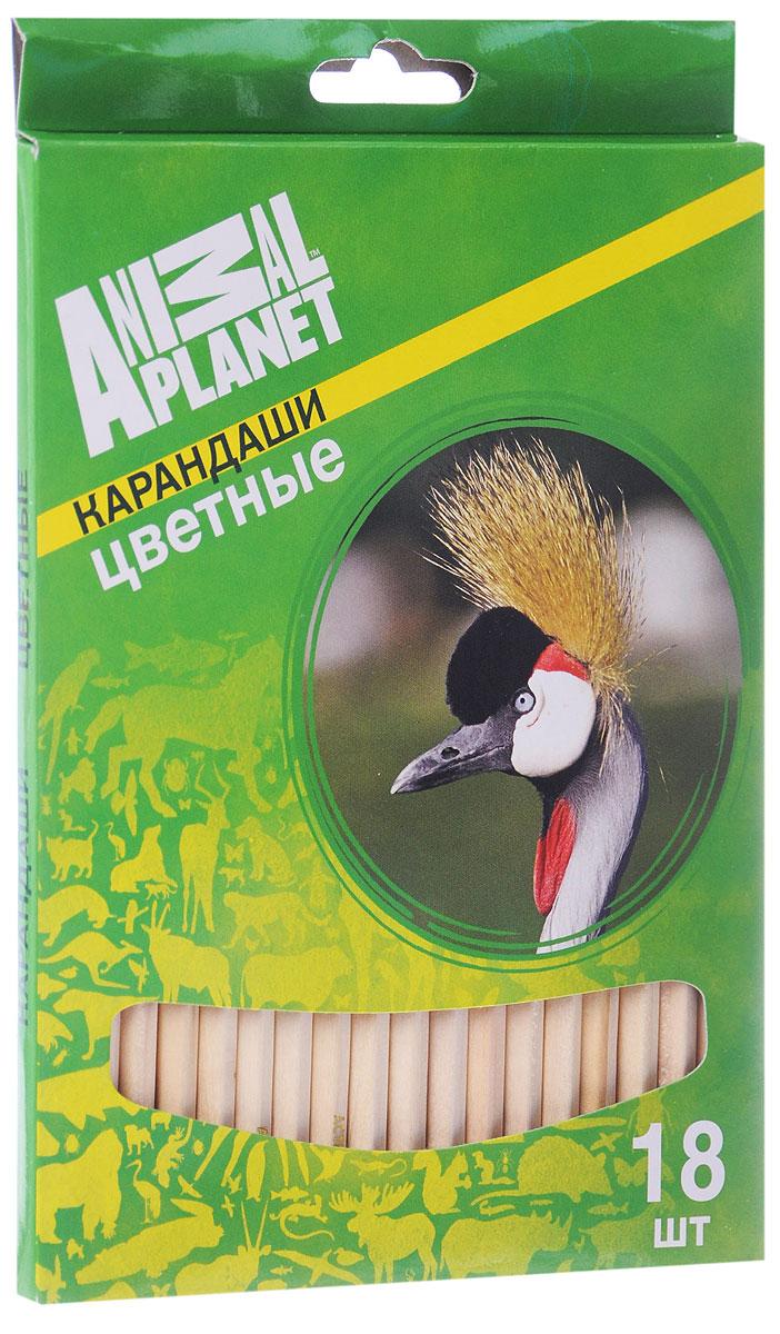 Action! Набор цветных карандашей Animal Planet Птицы 18 цветовAP-ACP105-18_2Цветные карандаши Action Animal Planet. Птицы откроют юным художникам новые горизонты для творчества, а также помогут отлично развить мелкую моторику рук, цветовое восприятие, фантазию и воображение. Традиционный шестигранный корпус изготовлен из натуральной древесины светлого цвета. Карандаши удобно держать в руках, а мягкий грифель не требует сильного нажима. Комплект включает 18 заточенных карандашей ярких насыщенных цветов.