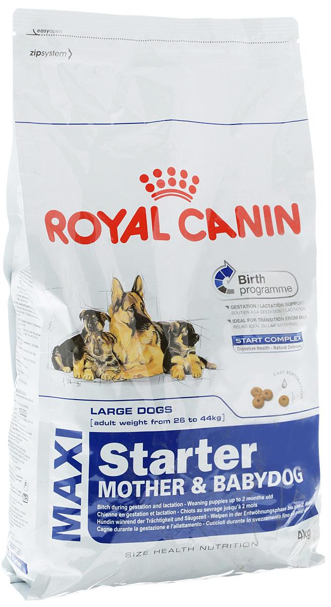 """Корм сухой Royal Canin """"Maxi Starter. Mother & Babydog"""", для беременных собак весом от 26 кг до 44 кг и щенков, 4 кг 33180"""