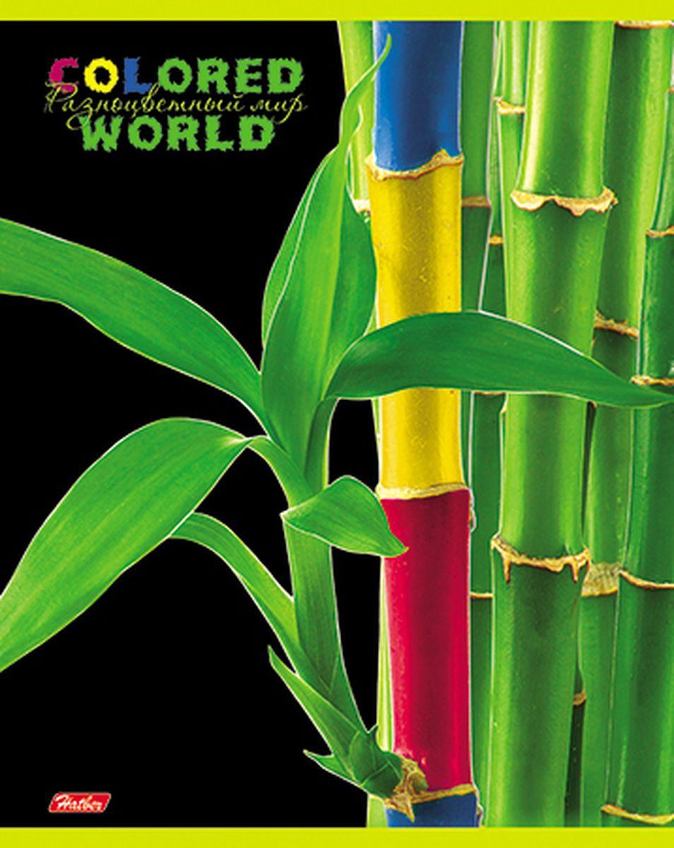 Hatber Тетрадь Разноцветный мир 96 листов в клетку 1455796Т5вмВ1_14557Тетрадь Hatber Разноцветный мир отлично подойдет для старших школьников, студентов и офисных работников. Обложка, выполненная из плотного картона, позволит сохранить тетрадь в аккуратном состоянии на протяжении всего времени использования. Лицевая сторона оформлена изображением удивительных по красоте растений, разукрашенных в яркие и причудливые цвета. Внутренний блок тетради, соединенный двумя металлическими скрепками, состоит из 96 листов белой бумаги. Стандартная линовка в клетку голубого цвета дополнена полями, совпадающими с лицевой и оборотной стороны листа.