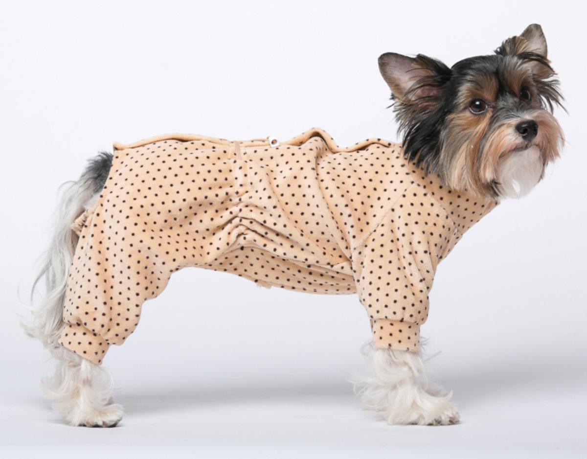 Комбинезон для собак Yoriki Веснушки, для мальчика, цвет: бежевый. Размер S0120710Велюровый комбинезон для собак Yoriki Веснушки отлично подойдет для прогулок в прохладную погоду. Застегивается комбинезон на спине на кнопки и дополнительно затягивается на талии шнурком. Благодаря такому комбинезону вашему питомцу будет комфортно наслаждаться прогулкой.Обхват шеи: 20-24 см.Длина по спинке: 21 см.Объем груди: 29-36 см.