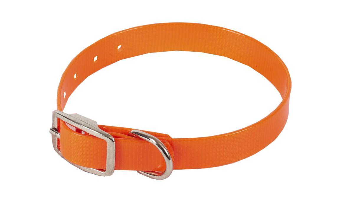 Ошейник для собак Каскад Синтетик, цвет: оранжевый, ширина 1,5 см, обхват шеи 26-35 см00215351-03Ошейник для собак Каскад Синтетик изготовлен из высокотехнологичного биотана (нейлон, термопластичный полиуретан). Сверхпрочный ошейник удобен и практичен в использовании, не выгорает, устойчив к влажности, не рвется и не деформируется. Размер ошейника регулируется с помощью металлической пряжки, которая фиксируется на одном из 7 отверстий изделия. Яркий ошейник Каскад Синтетик идеально подойдет для активных собак, для прогулок на природе и охоты. Минимальный обхват шеи: 26 см. Максимальный обхват шеи: 35 см. Ширина: 1,5 см.
