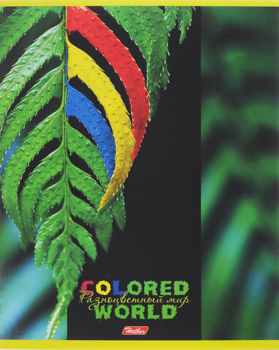 Hatber Тетрадь Разноцветный мир 96 листов в клетку 14561 hatber тетрадь полосатый мир 96 листов в линейку цвет оранжевый