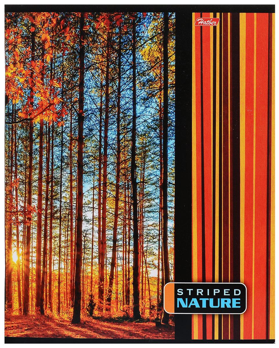Hatber Тетрадь Полосатый мир 96 листов в линейку цвет оранжевый 96Т5В2_14372