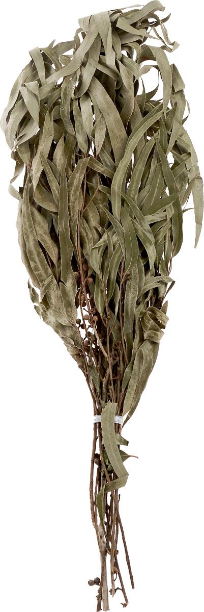 Веник Оригинальный, эвкалиптовыйБ192Банный веник - настоящий символ русской бани, использование веника в бане древняя традиция, имеющая глубокие корни. Полезность эвкалипта была открыта еще очень давно. Эвкалиптовым веником лечат заболевания органов дыхания и дыхательных путей. Кроме того, масла эвкалипта обладают очень хорошим антибактериальным и очищающим воздействием на кожу человека. Эфирное масло, содержащееся в этом растении, способствует снижению риска онкологических заболеваний и укрепляет иммунитет. Веник увеличивает целебные и оздоровительные свойства бани и является профилактическим средством большинства заболеваний, а также прекрасно массирует и очищает кожу. Состав: эвкалипт. Длина веника: 54 см.
