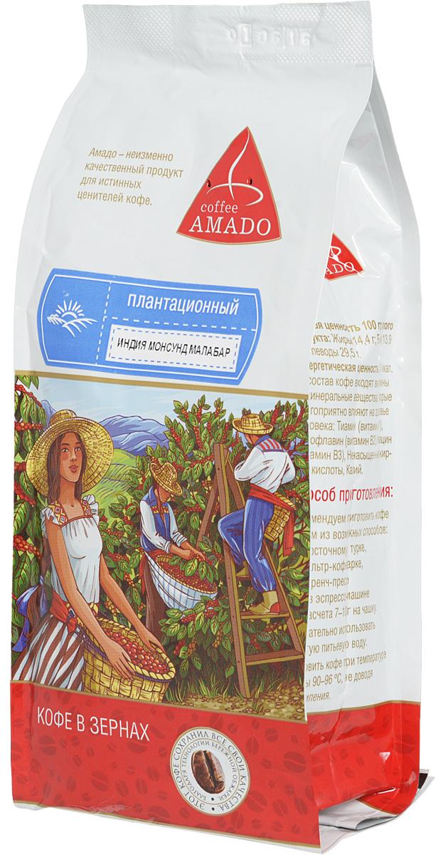 AMADO Индия Монсунд Малабар кофе в зернах, 500 г0120710В сезон муссонов в Индии зерна кофе помещают под навесы на несколько дней. Пребывание в условиях повышенной влажности и ветра меняет цвет зерен с зеленого на желтоватый, а вкус кофе приобретает сладость. Рекомендуемый способ приготовления AMADO Индия Монсунд Малабар: по-восточному, френч-пресс, гейзерная кофеварка, фильтркофеварка, кемекс, аэропресс.