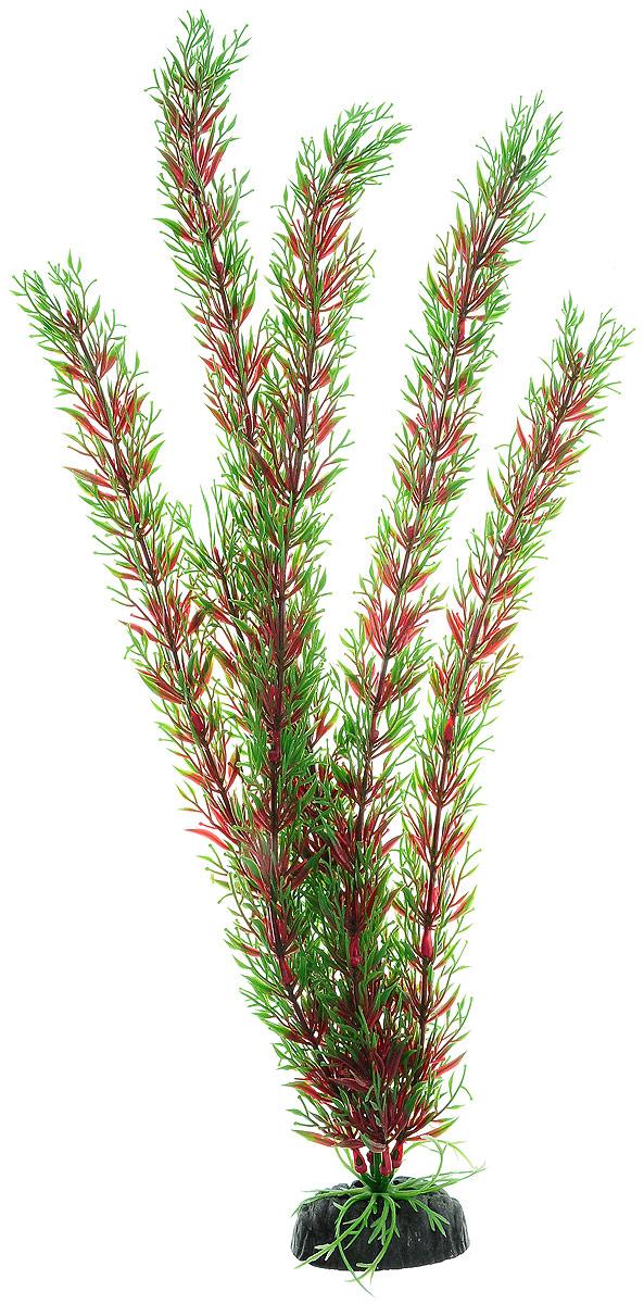 Растение для аквариума Barbus Перистолистник красный, пластиковое, высота 50 см0120710Растение Barbus Перистолистник красный, выполненное из высококачественного нетоксичного пластика, станет прекрасным украшением вашего аквариума. Пластиковое растение идеально подходит для дизайна всех видов аквариумов. В воде происходит абсолютная имитация живых растений. Изделие не требует дополнительного ухода. Оно абсолютно безопасно, нейтрально к водному балансу, устойчиво к истиранию краски, подходит как для пресноводного, так и для морского аквариума. Растение для аквариума Barbus Перистолистник красный поможет вам смоделировать потрясающий пейзаж на дне вашего аквариума.Высота растения: 50 см.