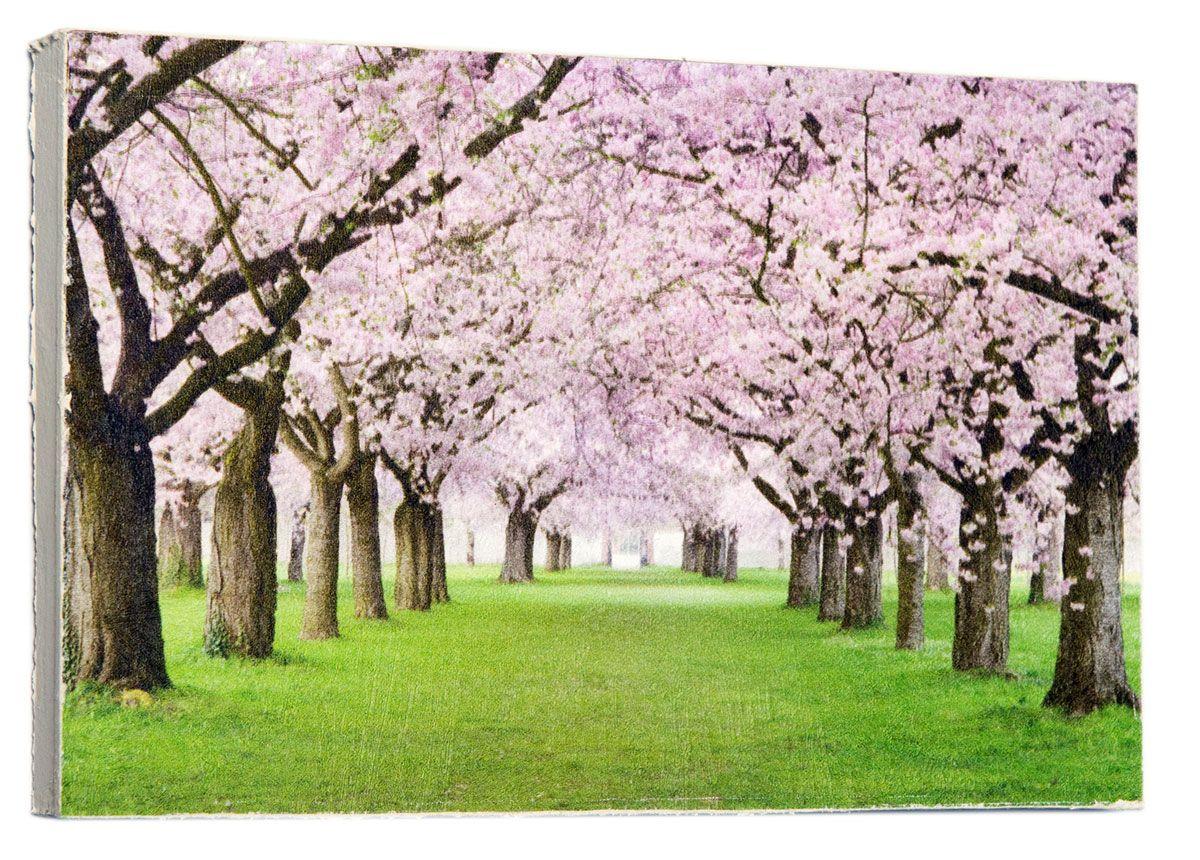 Картина Mister Poster Розовые цветы вишни, 22 х 14,5 смUP210DFКартина Mister Poster - это высококачественная репродукция на деревянной раме. Лицевая поверхность имитирует штукатурку или натуральный холст, края окрашены вручную специальным декоративным составом.Современные технологии, уникальное оборудование и оригинальные чернила, используемые при изготовлении, делают постер устойчивым к выцветанию, а также гарантируют стойкость к воздействию негативных внешних факторов. Интерьер дома и офиса, в котором находится человек, в значительной степени влияет на его настроение и работоспособность. Правильное оформление интерьера создает благоприятный психологический климат, улучшает настроение и мотивирует. Добавьте «красок» в ваш интерьер и, возможно, в вашу жизнь.