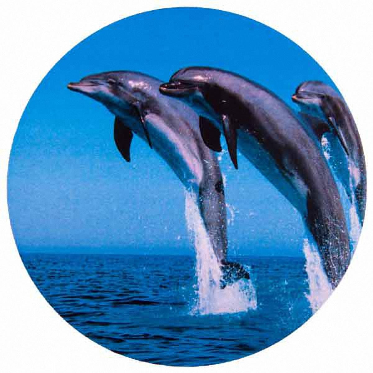 Чехол на запасное колесо Skyway Дельфины, диаметр 67 смS06301011Чехол Skyway Дельфины обеспечивает защиту запасного колеса автомобиля от загрязнений, прямых солнечных лучей, воздействия воды, посторонних предметов, агрессивных сред и других негативных факторов. Чехол изготовлен из прочной экокожи, которая легко моется и надолго сохраняет внешний вид. Чехол оформлен оригинальным изображением дельфинов и снабжен резинкой для легкого надевания. Благодаря чехлу, колесо сохранит свой внешний вид и характеристики. Размер колеса: R15. Диаметр чехла: 67 см.