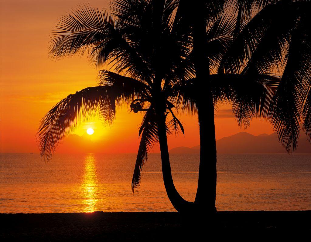 Фотообои Komar Восход солнца на пляже, 3,68 х 2,54 м8-255Бумажные фотообои известного бренда Komar с панорамным видом позволят создать неповторимый облик помещения, в котором они размещены. Фотообои наносятся на стены тем же способом, что и обычные обои. Благодаря превосходной печати и высококачественной основе такие обои будут радовать вас долгое время. Фотообои снова вошли в нашу жизнь, став модным направлением декорирования интерьера. Выбрав правильную фактуру и сюжет изображения можно добиться невероятного эффекта живого присутствия. Ширина рулона: 3,68 м. Высота полотна: 2,54 м. Клей в комплекте.