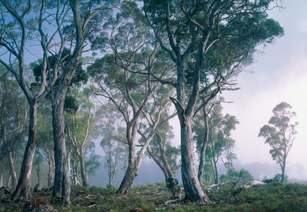 Фотообои Komar Фантастический лес, 3,68 х 2,54 м8-523Бумажные фотообои известного бренда Komar с панорамным видом позволят создать неповторимый облик помещения, в котором они размещены. Фотообои наносятся на стены тем же способом, что и обычные обои. Благодаря превосходной печати и высококачественной основе такие обои будут радовать вас долгое время. Фотообои снова вошли в нашу жизнь, став модным направлением декорирования интерьера. Выбрав правильную фактуру и сюжет изображения можно добиться невероятного эффекта живого присутствия. Ширина рулона: 3,68 м. Высота полотна: 2,54 м. Клей в комплекте.