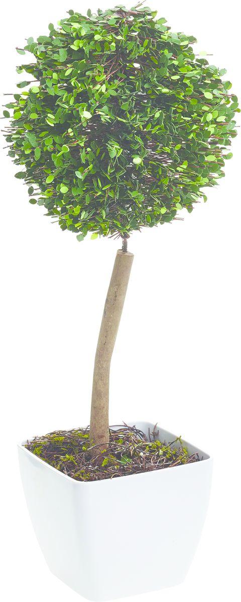 Растение искусственное Gardman Шар, со светодиодами, 38 см02871Растение, освещенное 10 светодиодами, можно расположить как внутри, так и снаружи помещения. Растение оснащено таймером: автоматическое включение на 6 часов -выключение на 18 часов. Работает от 3 батареек АА ( в комплект не включены)
