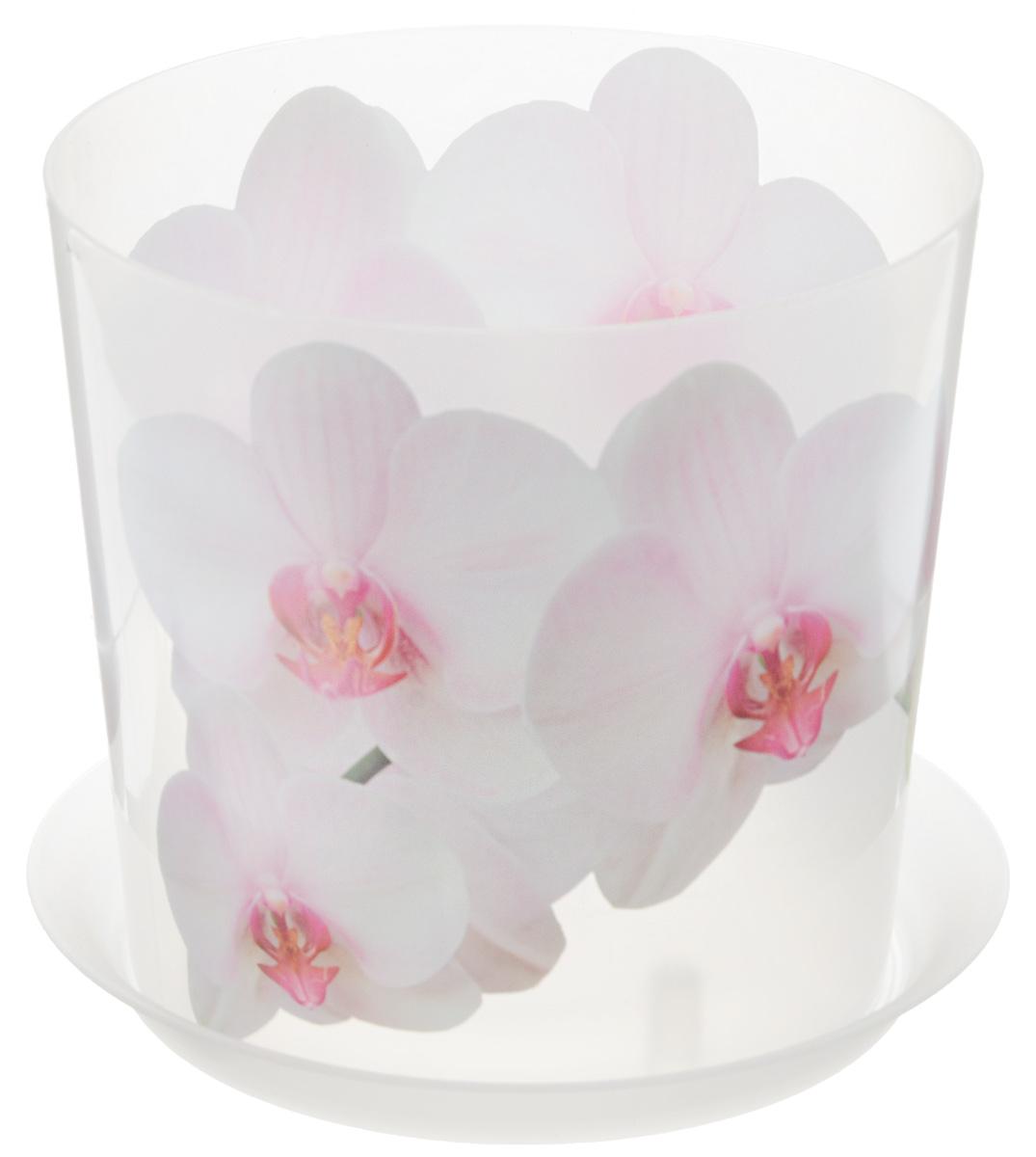 Кашпо Idea Деко, с подставкой, цвет: прозрачный, белый, 2,4 лМ 3106Кашпо Idea Деко изготовлено из высококачественного полипропилена. Специальный поддон предназначен для стока воды. Изделие прекрасно подходит для выращивания растений и цветов в домашних условиях. Лаконичный дизайн впишется в интерьер любого помещения. Диаметр поддона: 17,5 см. Диаметр кашпо по верхнему краю: 16 см. Высота кашпо: 15 см. Объем кашпо: 2,4 л.