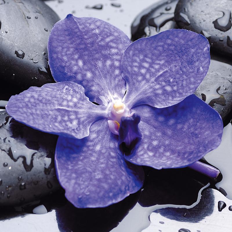 Декобокс Postermarket Голубая орхидея, 30 х 30 смU210DFДекобокс Postermarket Голубая орхидея выполнен из бумаги, рама из МДФ. Современные технологии, уникальное оборудование и цифровая печать, используемые в производстве, делают постер устойчивым к выцветанию и обеспечивают исключительное качество произведений. Благодаря наличию необходимых креплений в комплекте установка не займет много времени. Декобокс - это прекрасная возможность создать яркий акцент при оформлении любого помещения. Картина обязательно привлечет внимание и подарит немало приятных впечатлений своим обладателям. Правила ухода: можно протирать сухой, мягкой тканью.