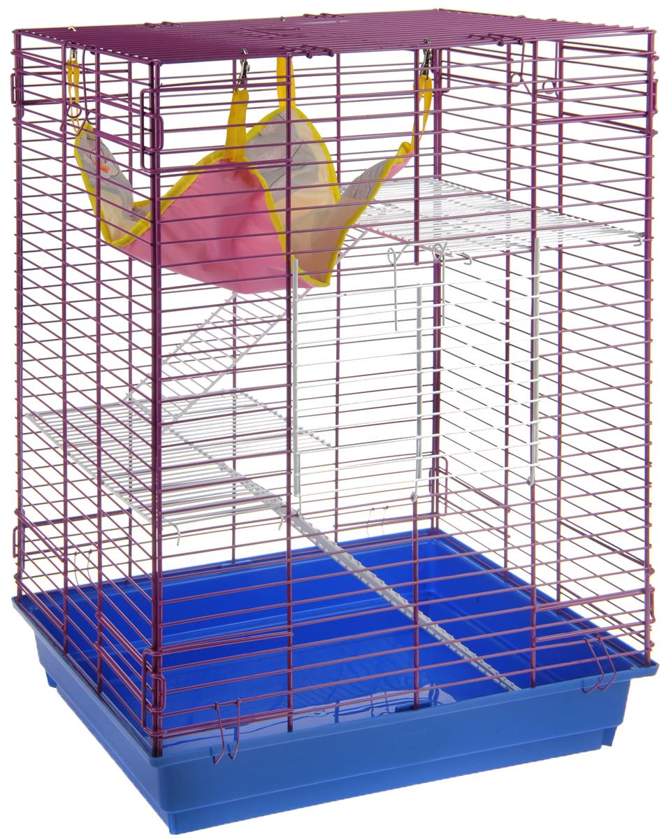 Клетка для шиншилл и хорьков ЗооМарк, цвет: синий поддон, ярко-фиолетовая решетка, 59 х 41 х 79 см. 725жк0120710Клетка ЗооМарк, выполненная из полипропилена и металла, подходит для шиншилл и хорьков. Большая клетка оборудована длинными лестницами и гамаком. Изделие имеет яркий поддон, удобно в использовании и легко чистится. Сверху имеется ручка для переноски. Такая клетка станет уединенным личным пространством и уютным домиком для грызуна.